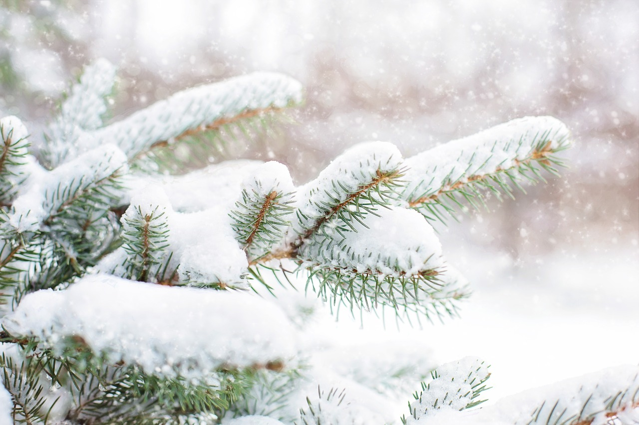 snow-in-pine-tree-1265119_1280