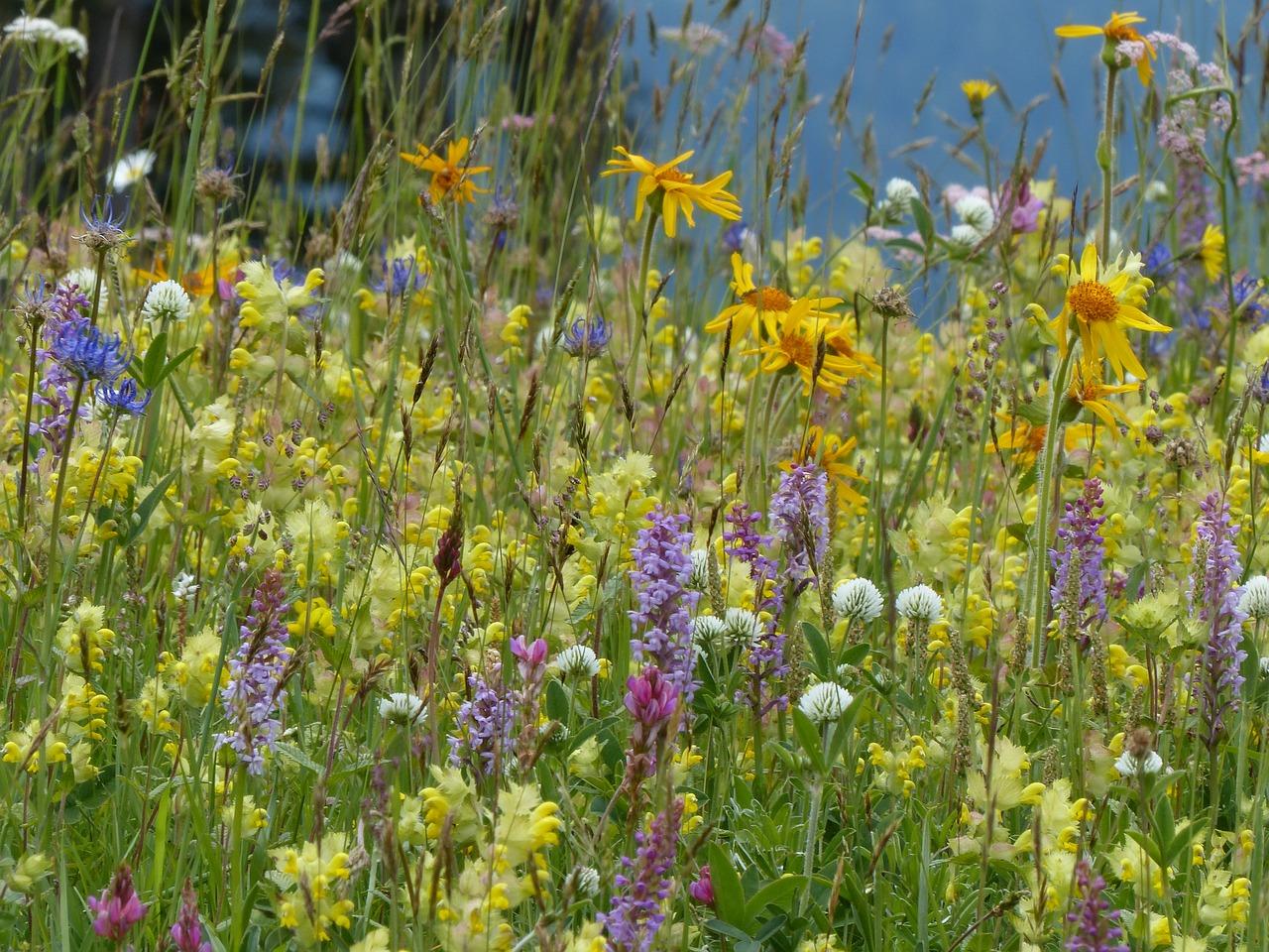 flower-meadow-1977395_1280