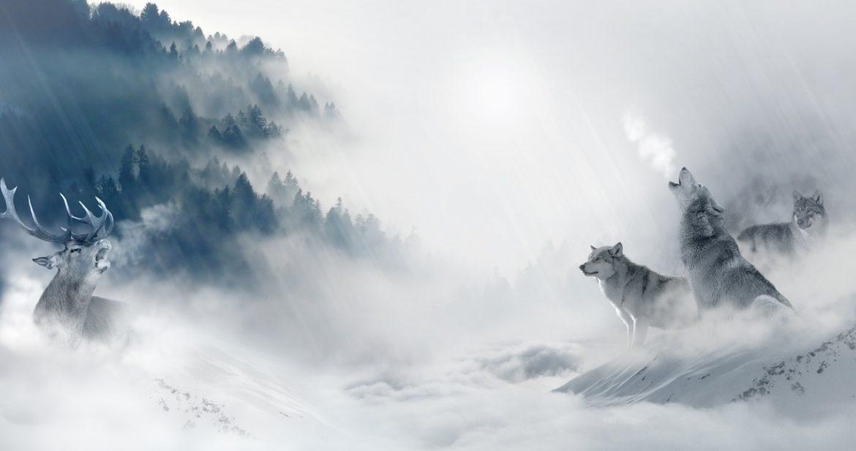 Illustration von Wolf und Hirsch im Schnee vor Berglandschaft