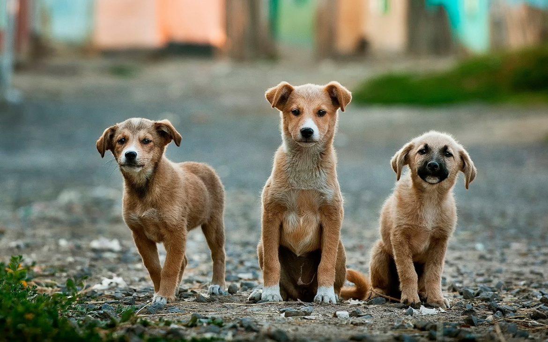 Foto von drei niedlichen Hundewelpen